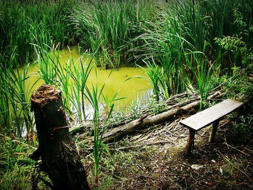 swamp reed bench