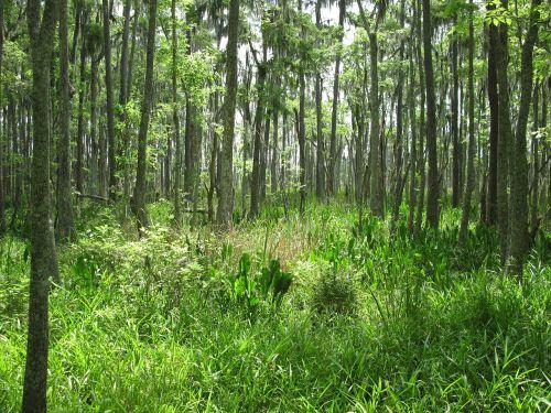swamp marsh nature