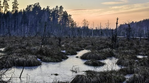 swamp  ice  winter