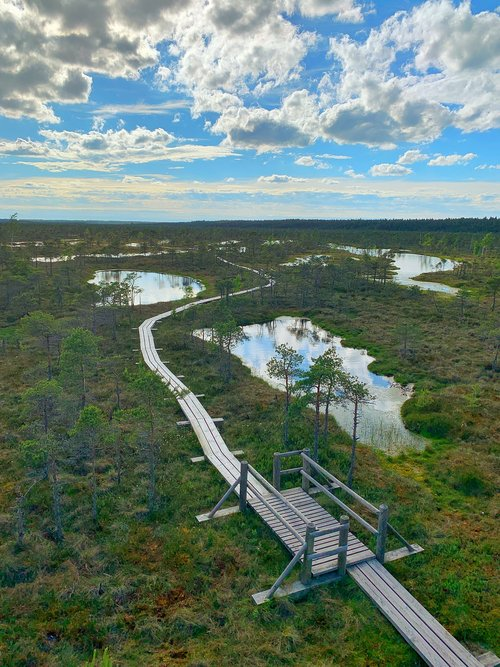 swamp  pond  raised