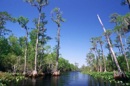 swamp water trees