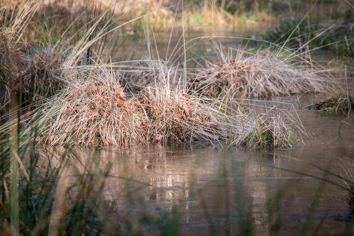 swamp grass grass moor