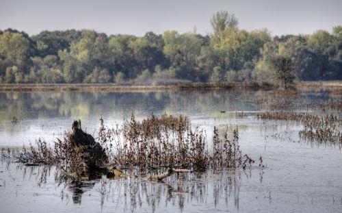 Swamp Plants In Wetlands