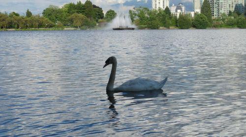 swan lake vancouver