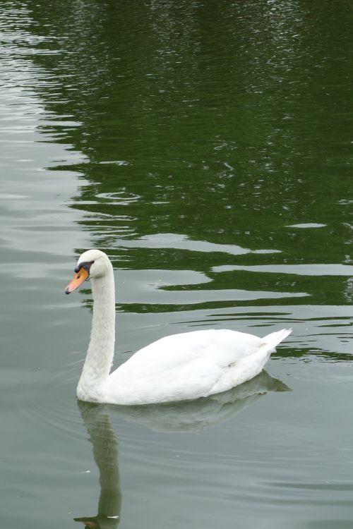 swan park sao paulo
