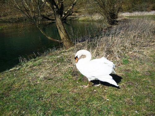 swan brenz eselsburg valley