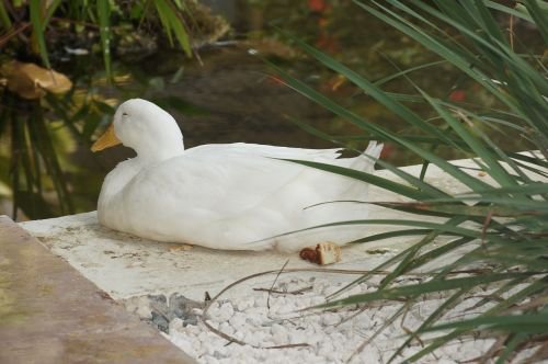 swan punta cana tropical