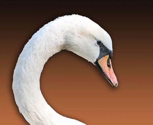 swan animal shelter wild animal
