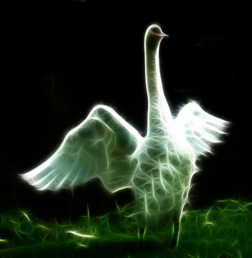swan image editing image editing programs