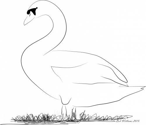 gulbė, vektorius, paukštis, gamta, gulbių vektorius