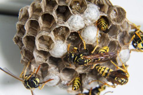 swarm wasps diaper
