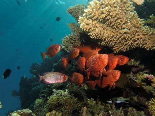swarm fish marine life