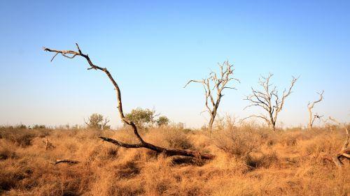 Svazilandas,afrika,natūralus,savana,kraštovaizdis,horizontas,mirę medžiai