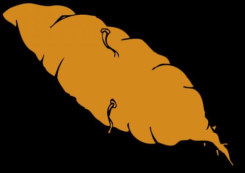 sweet potato root