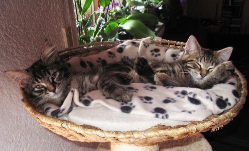 sweet 2 kittens sleeping