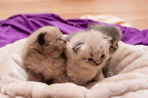 sweet cat babies
