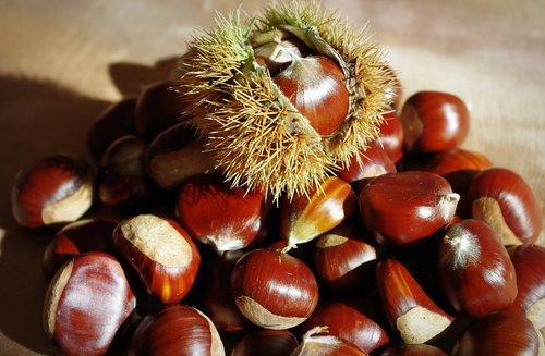 sweet chestnuts  maroni  chestnut