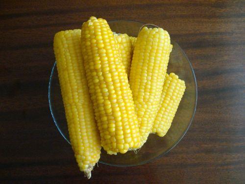 saldžiosios kukurūzai,pasėliai