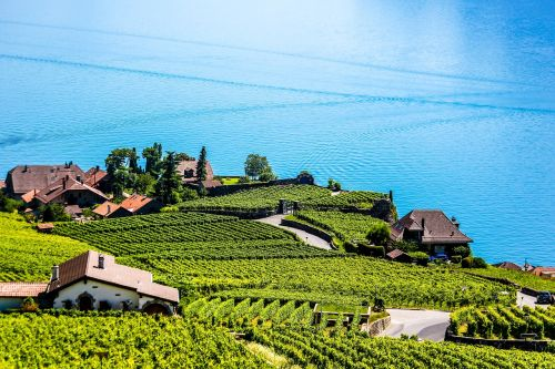 swiss montreux vineyard