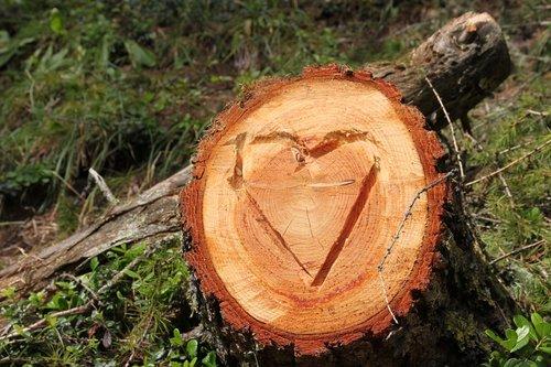 switzerland  davos  tree