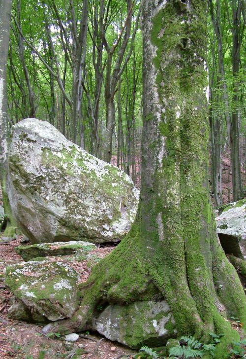 switzerland ticino tree