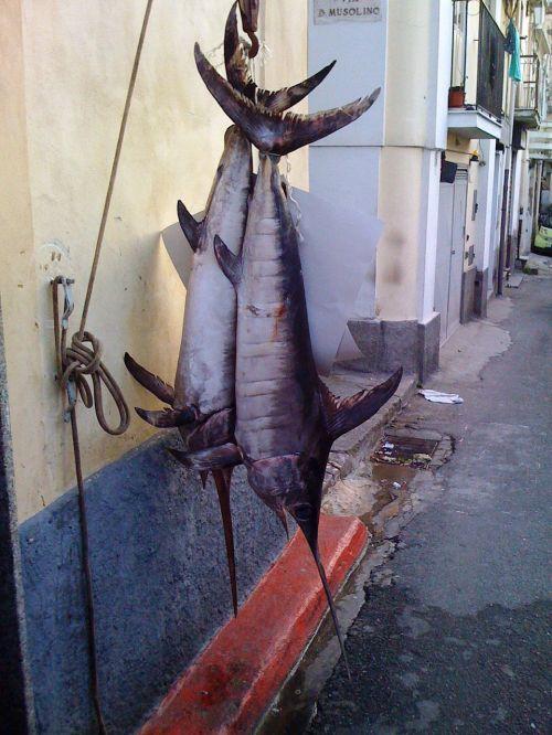 swordfish south italy calabria