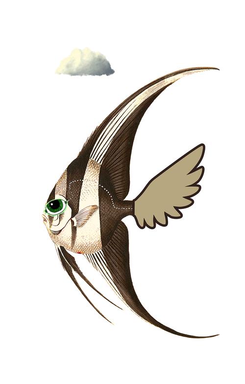 swordfish  cloud  comic