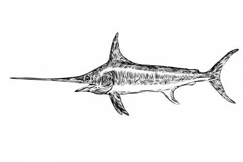 Swordfish Clipart Illustration