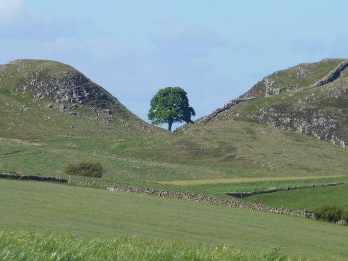 sycamore gap northumberland hadrian's wall