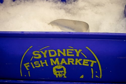 sydney  fish market  ice
