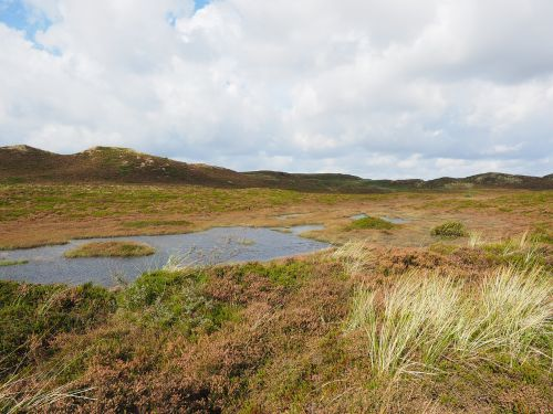 sylt heathland dunes