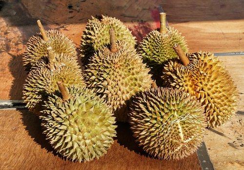 syrian  durio  fruit