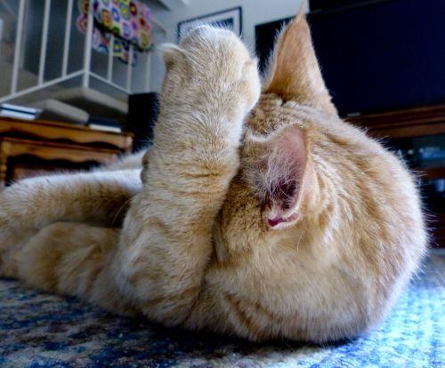 Tabby Cat Hide And Seek