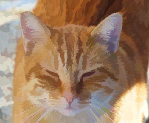 Tabby Ginger Cat
