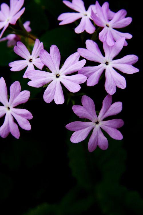 tabitha nature plants