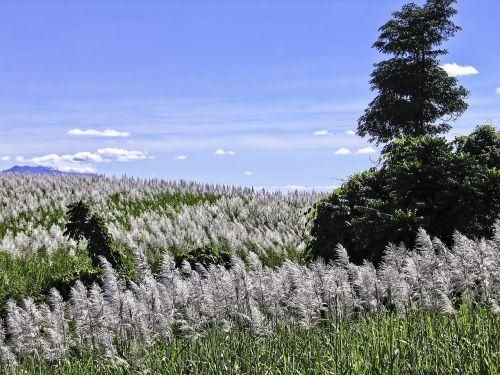 tablelands queensland tropical queensland