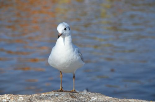 tags with a comma separated seagulls animal natural