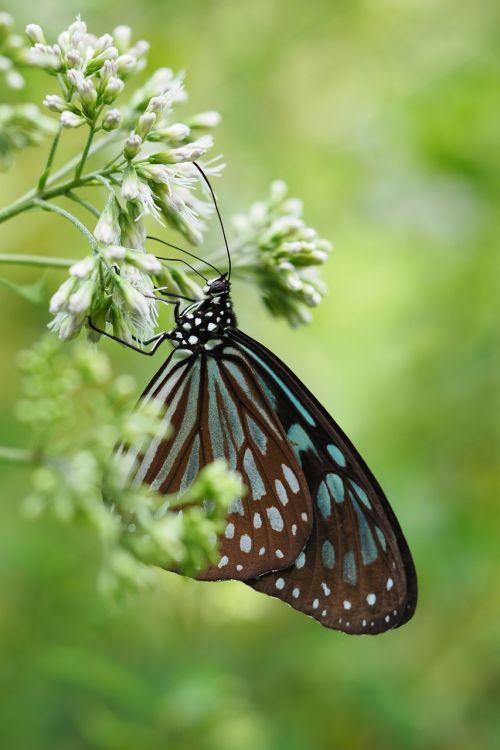 taipei botanical garden flower butterfly