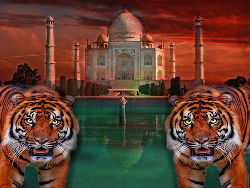 taj mahal tiger india