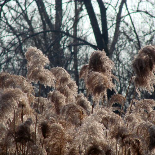 Tall Grass At The Nature Reserve