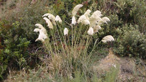 gėlė, gėlės, rožė, rožės, flora, augti, auga, sodas, sodai, krūmas, krūmai, sodininkystė, sodininkystė, žalias, augalas, augalai, botanikos, botanikos, aukšta pampos žolė