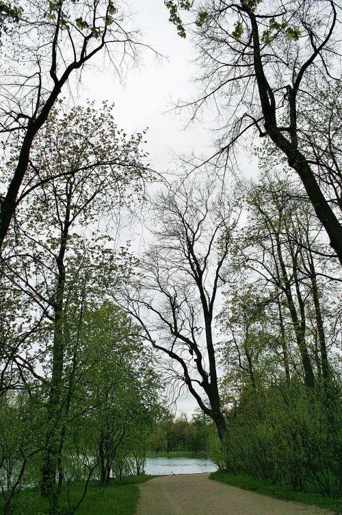 medžiai, aukštas, dangus, pilka, ežeras, veja, aukšti medžiai