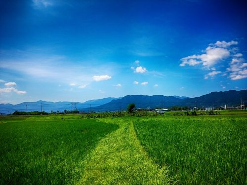 tanaka yamada's rice fields the countryside