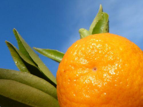 tangerine leaf sky