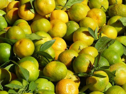 tangerines fruit healthy
