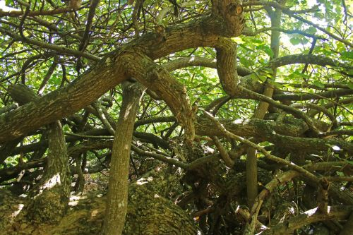 Tangled Trunks And Branches
