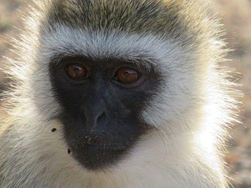 tanzania animals nature