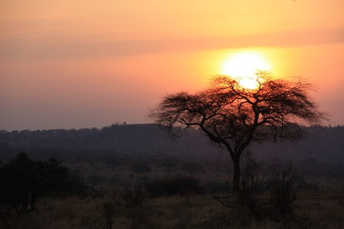 tanzania  savannah  sunset
