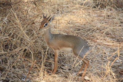 tanzania  animals  wild