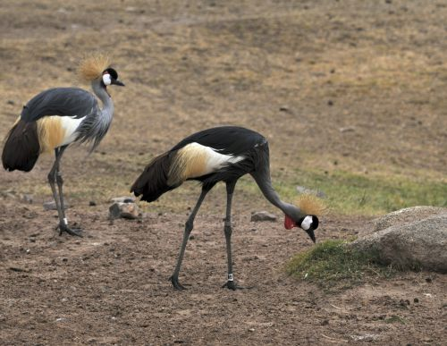 Tanzania Birds